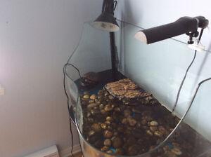 Tortue avec aquarium
