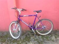 Apollo mans bike