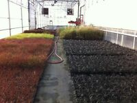 Root Zone Heating Systems