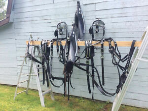 Team Show Harness in Excellent condition