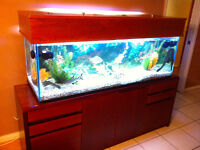 Fish and Aquarium Package