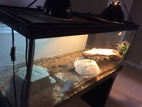 Turtles, tank and accessories