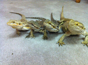 NEW Reptile/Amphibian/Supplies network on Facebook!