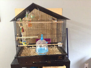 Zebra finches and large cage