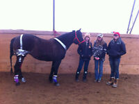 JUNE 13 Emergency Equine First Aid Course in DAWSON CREEK
