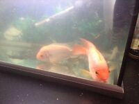 Parrot fish £10 large and Madas large £10