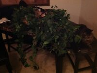 2 Draping Artificial Plants