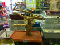 LRG TABLE TOP JAVA-WOOD TREE