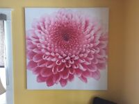Large pink flower canvas painting