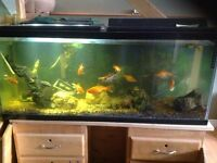 A bunch of fish for sale need gone