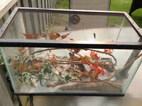 Reptile/fish tank with lid