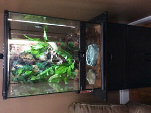 Crested geckos with cage and stand