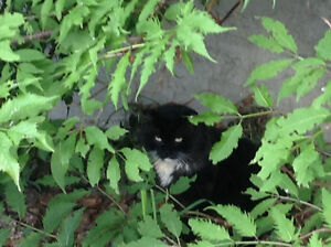 Found? black and white cat west end - Belmead
