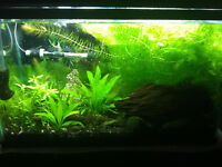 10 gallon fully planted fish tank for trade