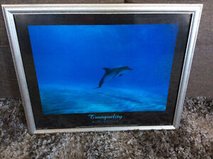 Framed dolphin picture