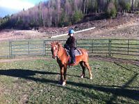 GREAT PONY FOR SALE