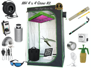 Grow Cannabis at Home - Grow Tent, LED lighting, Filters Fans!