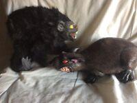 Halloween Pets .!?