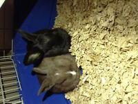 2 cute baby bunnies need to be gone ASAP