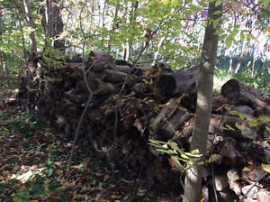 FIRE WOOD for sale Peterborough Peterborough Area image 1