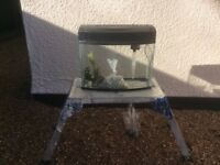 Bow fronted complete cool water aquarium fish tank set up