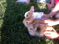 Pet baby rabbits