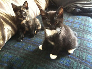 Cute, cuddly kitten for growing family