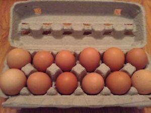 Farm Fresh Free Range Brown Eggs