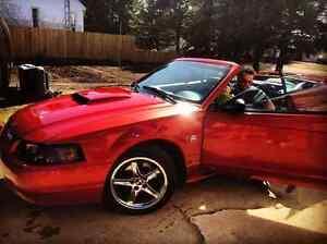 2004 Mustang 40 anniversary