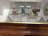 Pair lovebirds w cage + one lovebird w cage - $175 or best offer