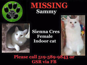 Sammy is still missing in Huron Village