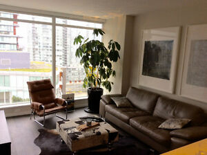 Beautiful One bedroom + DEN available for Nov 1st - The Maddox