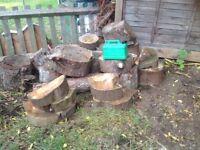Dry seasoned pine wood burner fire pit stove pile 2