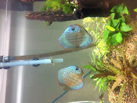 Poisson couple discus