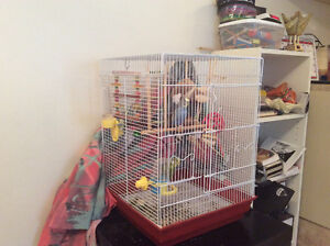 2 parokeets with cage/toys