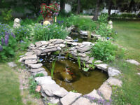 Need someone to look after a rock garden .