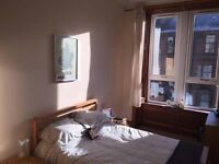 Professional for flatshare in Dennistoun