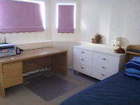 Room available for summer