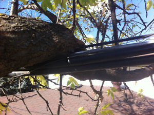 Tree REMOVAL-TREE Triming/Pruning>FALL SPECIAL...... Kitchener / Waterloo Kitchener Area image 2