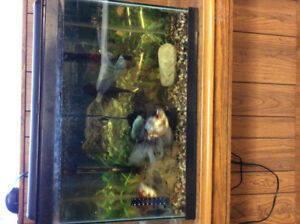 Fish and aquarium comes with everything needed. $200 obo