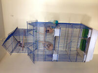 Two zebra finches /large cage