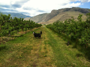 Organic orchard for sale