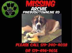 Archie is missing