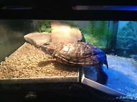 Turtles need new home ASAP