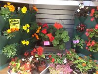 Variety of plants starting from only £1