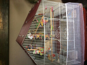2 beautiful budgies and cage