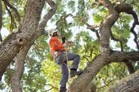Tree removal service, book now and get 15% for spring season