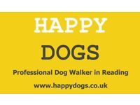 Happy Dogs - Professional Dog Walker in Reading - 5 Star Reviews