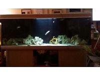 6'x2'x2' Aqua One Fish tank and oak wooden cabinet