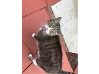 Cats - need a good caring home before 30/8/18